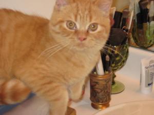 Rudi as a kitten.